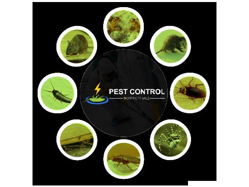 Pest Control Morphett Vale