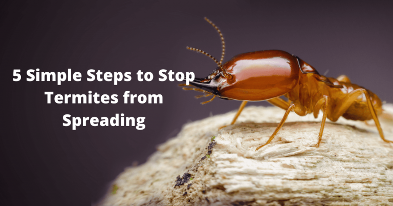 5 Simple Steps to Stop Termites from Spreading