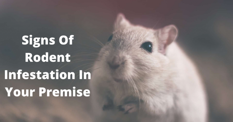 Signs Of Rodent Infestation In Your Premise